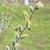 shot · bijen · frame · werken · dier · zoete - stockfoto © mycola