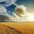 bom · pôr · do · sol · dourado · colheita · macio · foco - foto stock © mycola