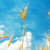 złoty · pszenicy · dwa · dojrzały · zbóż · do · góry · nogami - zdjęcia stock © mycola
