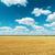 maduro · trigo · belo · blue · sky · amarelo · campo - foto stock © mycola