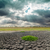 干ばつ · 土地 · 植物 · テクスチャ · 抽象的な · 夏 - ストックフォト © mycola