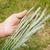 çiftçi · el · yeşil · buğday · gökyüzü · yaz - stok fotoğraf © mycola
