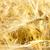 golden wheat ears south ukraine stock photo © mycola