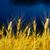 zbiorów · deszcz · świeże · ogród · warzyw · kroplami · wody - zdjęcia stock © mycola