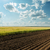 zöld · búzamező · kék · felhős · égbolt · nyár - stock fotó © mycola