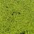 água · erva · daninha · padrão · textura · árvore · folha - foto stock © mycola