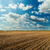 plowed field and cloudy sky in sunset stock photo © mycola
