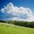 yeşil · tepe · ağaçlar · çam · görmek · küçük - stok fotoğraf © mycola
