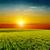 良い · 赤 · 日没 · 干ばつ · 太陽 · 自然 - ストックフォト © mycola