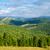美しい · 自然 · 緑 · 木 · 晴れた · 午後 - ストックフォト © mycola