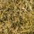 złota · świetle · lata · papieru · tekstury - zdjęcia stock © mycola