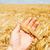 kéz · búza · étel · természet · fül · személy - stock fotó © mycola