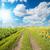 csodálatos · arany · mező · fehér · felhők · báj - stock fotó © mycola