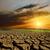 sunset over cracked earth stock photo © mycola