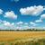rural landscape under cloudy sky stock photo © mycola