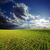 field with green grass under deep blue sky stock photo © mycola