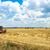 colheita · milho · campo · trabalhando · plantação - foto stock © mycola