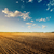 black field after harvesting and blue cloudy sky stock photo © mycola