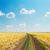 rural road in field with golden harvest and blue sky stock photo © mycola