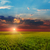 sunset over agricultural green field stock photo © mycola
