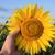 mão · girassol · campo · céu · flor - foto stock © mycola