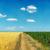 sporca · strada · campo · girasoli · cielo · blu · cielo - foto d'archivio © mycola