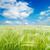 フィールド · 緑 · 小麦 · 曇った · 空 · 光 - ストックフォト © mycola