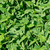 緑の草 · テクスチャ · 自然 · 春 · 草 · 抽象的な - ストックフォト © mycola