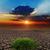 劇的な · 日没 · 干ばつ · 地球 · 光 · オレンジ - ストックフォト © mycola