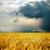 chuvoso · dia · colheita · sol · natureza · paisagem - foto stock © mycola