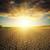 drammatico · tramonto · screpolato · terra · sole - foto d'archivio © mycola