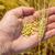 gazda · kéz · búzamező · mezőgazdasági · megművelt · nyár - stock fotó © mycola