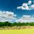лес · озеро · аннотация · природного · фоны - Сток-фото © mycola