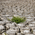 завода · сушат · треснувший · грязи · лист · пустыне - Сток-фото © mycola