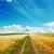 road in golden fields stock photo © mycola