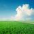 primavera · paisagem · grama · verde · estrada · nuvens · céu - foto stock © mycola