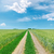 rural road to horizon in green fields and blue sky with clouds stock photo © mycola