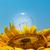 altın · ekolojik · enerji · sarı - stok fotoğraf © mycola