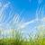 草 · 空 · 階 · 緑の草 · 青空 - ストックフォト © mycola