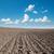 campo · primavera · grama · paisagem · verão · azul - foto stock © mycola