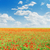 groene · veld · Rood · klaprozen · bewolkt · hemel - stockfoto © mycola