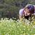 camomila · flores · jardim · flor · primavera · verão - foto stock © myimagine