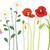 meadow flowers stock photo © myosotisrock