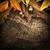 öreg · tölgyfa · ősz · park · hatalmas · nap - stock fotó © mythja