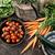 basket · vegetali · giardino · barbabietole · carote - foto d'archivio © mythja