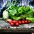 frissen · paradicsomok · nagy · kosár · tele · koktélparadicsom - stock fotó © mythja