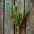 ハーブ · 薬 · ヴィンテージ · 木材 · 自然 · 美 - ストックフォト © mythja