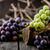 fresco · uvas · madeira · outono · fruto · vinho - foto stock © mythja