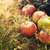organic fruit in summer grass foto stock © mythja