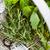fresh herbs stock photo © mythja
